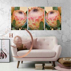Canvasses